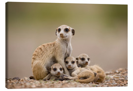 Paul Souders - Meerkat family in Namibia