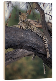 Wood print  Leopard is resting on tree - Paul Souders