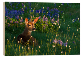 Wood print  Fawn on alpine flower meadow - Ken Archer