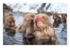 Premium poster  Japanese Snow Monkeys in Nagano - Jan Christopher Becke