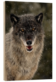 Wood print  Wolf in the snow - James Hager