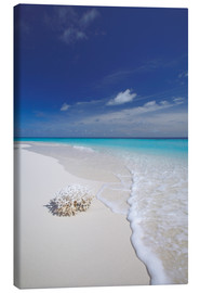 Canvas print  Coral on white sand beach - Sakis Papadopoulos