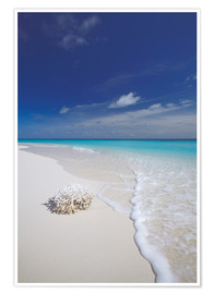 Premium poster  Coral on white sand beach - Sakis Papadopoulos