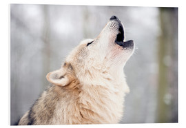 Foam board print  Wolf howling in the forest - Louise Murray