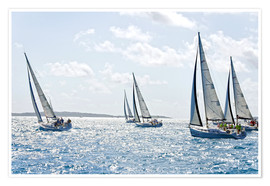 Premium poster Sailboat regattas