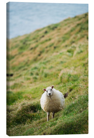 Canvas print  Thick sheep, Heimaey Island - Christian Kober
