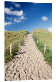 Acrylic print  Path through dunes, Sylt, North Frisian Islands,Nordfriesland, Schleswig Holstein, Germany - Markus Lange