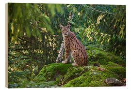 Wood print  Lynx in the Bavarian National Park - Roberto Moiola