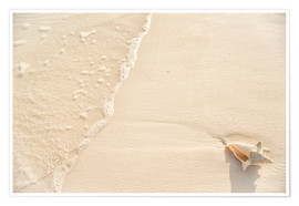 Premium poster  Washed up conch on shore - Kim Walker