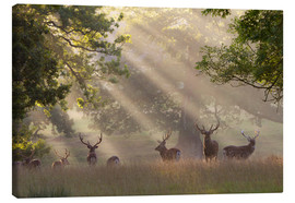 Canvas print  Deer in morning mist - Stuart Black