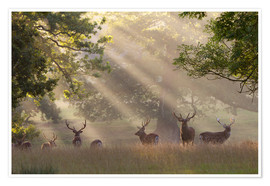 Premium poster  Deer in morning mist - Stuart Black