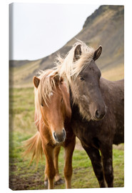 Canvas print  Horses, South Iceland, Northern Europe