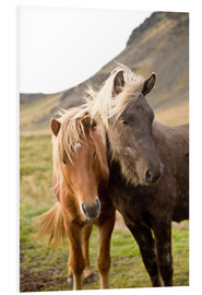 Foam board print  Horses, South Iceland, Northern Europe