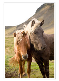 Premium poster  Horses, South Iceland, Northern Europe