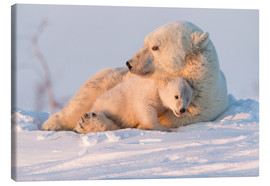 Canvas print  Polar bear (Ursus maritimus) and cub, Wapusk National Park, Churchill, Hudson Bay, Manitoba, Canada, - David Jenkins