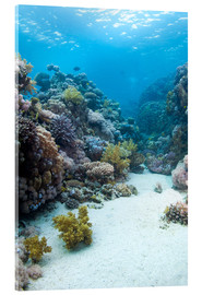 Acrylic print  Coral reef in blue water - Mark Doherty