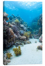 Canvas print  Coral reef in blue water - Mark Doherty