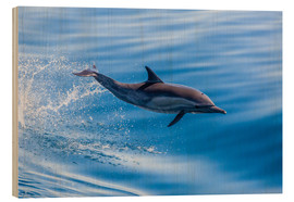 Wood print  Long-beaked common dolphin leaping - Michael Nolan