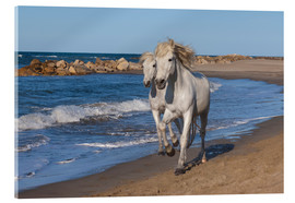 Acrylic glass  Camargue horses on the beach