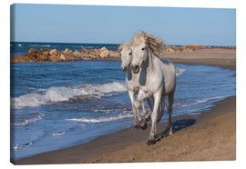 Canvas print  Camargue horses on the beach