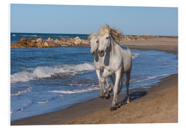 Foam board print  Camargue horses on the beach