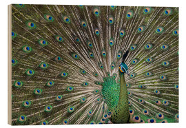 Wood print  Java green peafowl (Pavo muticus) - Gabrielle & Michel Therin-Weise