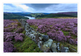 Premium poster  Heather covered Bamford Moor and dry stone wall - Eleanor Scriven