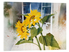 Acrylic print  Sunflowers - Franz Heigl