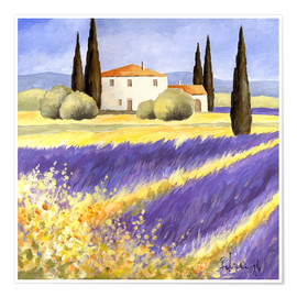 Premium poster  Light of Provence - Franz Heigl