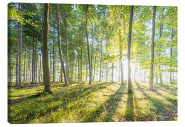 Canvas print  Forest at sunrise - Hannes Cmarits