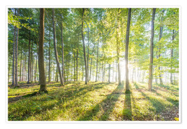 Premium poster  Forest at sunrise - Hannes Cmarits