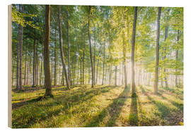Wood  sunrise in the forest - Hannes Cmarits