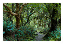Premium poster  Primeval forest on kepler track, fiordland, new zealand - Peter Wey