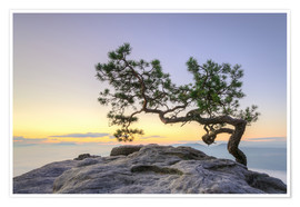 Premium poster  Pine on the Lilienstein, Saxon Switzerland - Michael Valjak