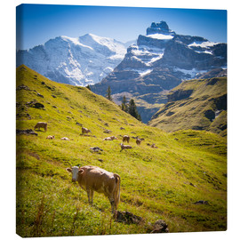 Canvas  Cow in the Swiss Alps - Jan Schuler