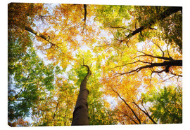 Canvas print  Treetops in autumn - Oliver Henze
