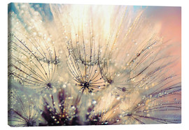 Canvas  Pusteblume sunset - Julia Delgado