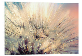 Foam board print  Dandelion sunset - Julia Delgado