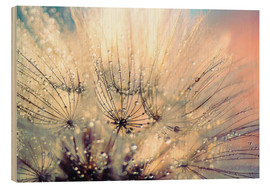Wood print  Dandelion sunset - Julia Delgado