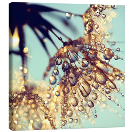 Canvas print  Pusteblume   golden - Julia Delgado