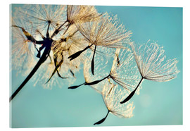 Acrylic print  Pusteblume   Flying high - Julia Delgado