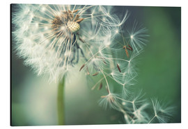 Aluminium print  Dandelion in the wind - Julia Delgado