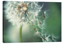 Canvas print  Dandelion in the wind - Julia Delgado