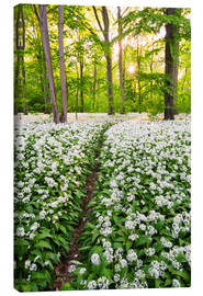 Canvas print  Wild Garlic Trail - Dave Derbis