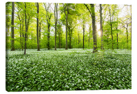 Canvas print  Spring Forest - Dave Derbis