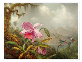 Premium poster  Cattleya Orchid and three Brazilian hummingbirds - Martin Johnson Heade