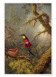 Premium poster  A pair Rotnacken topaz hummingbird - Martin Johnson Heade