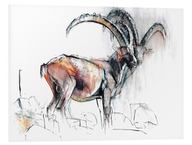 Foam board print  ibex - Mark Adlington