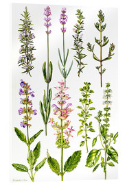 Acrylic print  Rosemary and other herbs - Elizabeth Rice