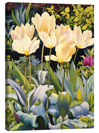 Canvas print  Pale tulips - Christopher Ryland